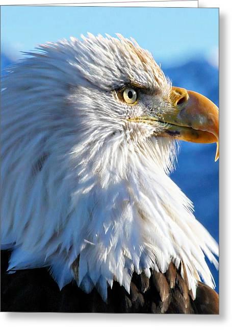 Bald Greeting Cards - Homer Alaska Bald Eagle  Greeting Card by Alanna Allen