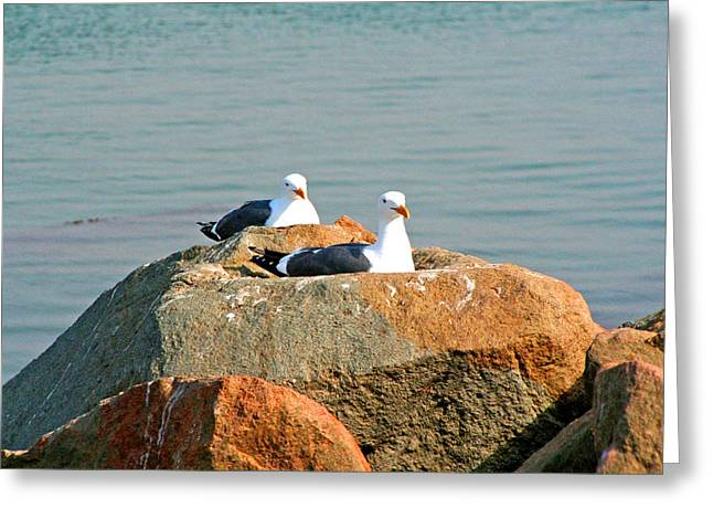 Half Moon Bay Digital Greeting Cards - HomeSteading Greeting Card by Joseph Coulombe