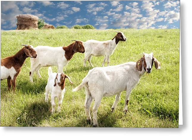 Pasture Framed Prints Greeting Cards - Homeward Bound Greeting Card by Amy Tyler