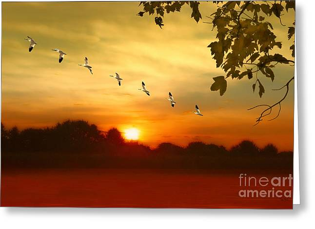 Sundown Framed Prints Greeting Cards - Homeward Bound Greeting Card by Tom York Images