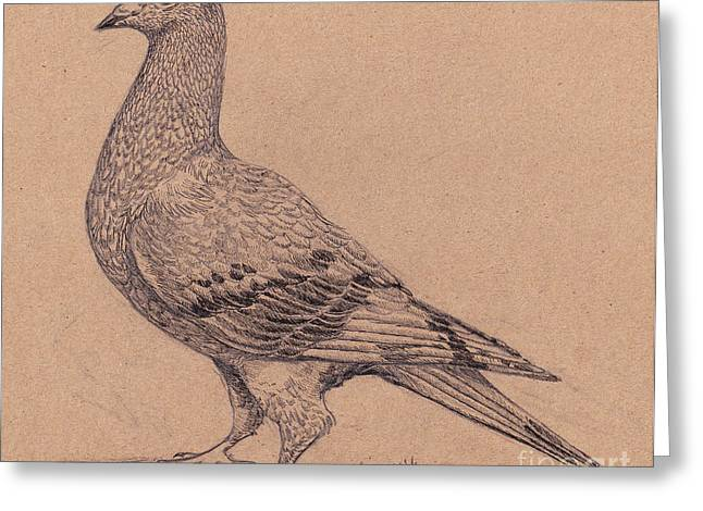 Carrier Drawings Greeting Cards - Homing Pigeon Greeting Card by Callie Smith