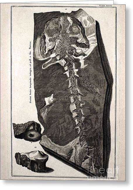 Creationism Greeting Cards - Homo Diluvii Testis, Scheuchzer, 1726 Greeting Card by Paul D. Stewart