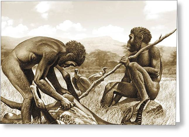 Bipedal Greeting Cards - Homo habilis hunting, artwork Greeting Card by Science Photo Library
