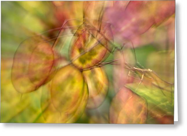 Mid Summer Greeting Cards - Honesty Greeting Card by John Potter