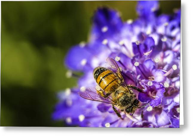 Pincushion Greeting Cards - Honey Bee Greeting Card by Caitlyn  Grasso