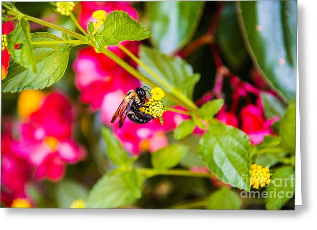 Clear Sky Images Greeting Cards - Honey Bee Greeting Card by Clear Sky Images