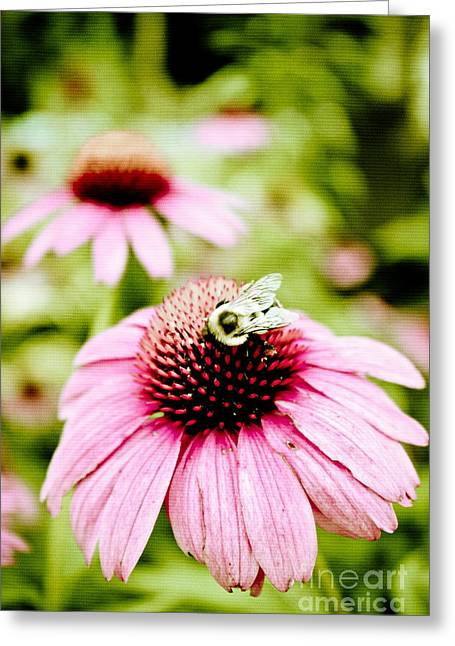 Original Art Photographs Greeting Cards - Honey Bee Greeting Card by Colleen Kammerer