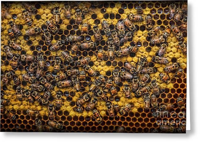Honeycomb Greeting Cards - Honey Bee Colony - Beekeeper Greeting Card by Lee Dos Santos
