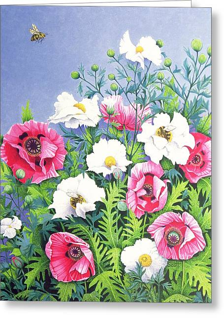 C20th Greeting Cards - Honey Bee, Honey Bee Oil On Canvas Greeting Card by Pat Scott