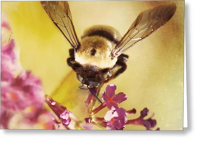 Beekeepers Greeting Cards - Honey Bee Greeting Card by Kim Fearheiley