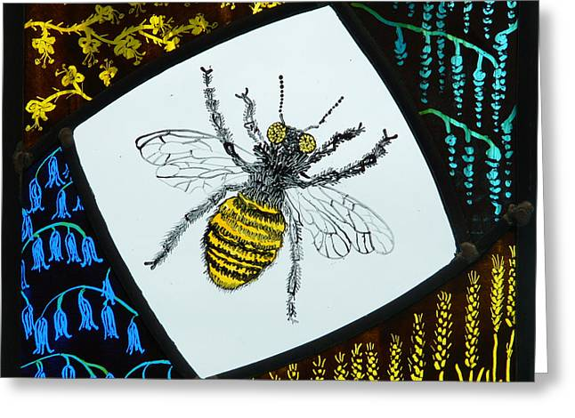 Bees Glass Art Greeting Cards - Honey Bee Greeting Card by Ron Harpham