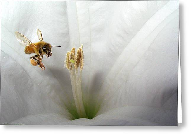 Numbers Plus Photography Greeting Cards - Honey Bee Up Close And Personal Greeting Card by Joyce Dickens