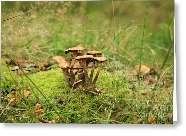 Forest Floor Greeting Cards - Honey fungus Greeting Card by Louise Heusinkveld