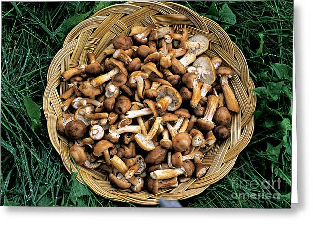 Fresh Produce Greeting Cards - Honey Mushrooms Greeting Card by Michael P. Gadomski