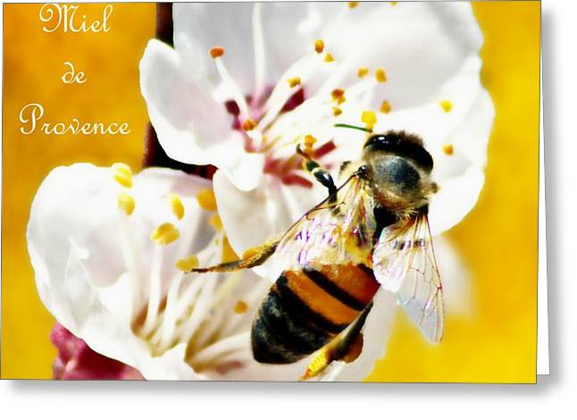 Stamen Digital Art Greeting Cards - Honey of Provence Greeting Card by Barbara Chichester