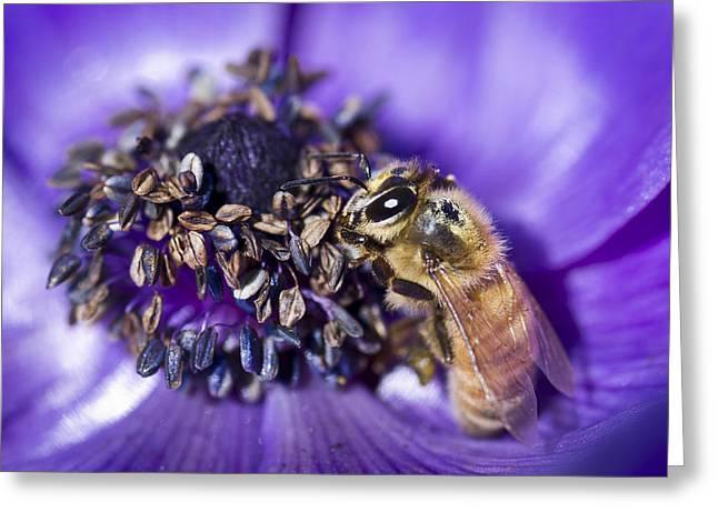 Honeybee And Anemone  Greeting Card by Priya Ghose