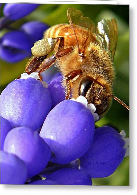 Blue Grapes Greeting Cards - Honeybee and Muscari Greeting Card by Chris Berry