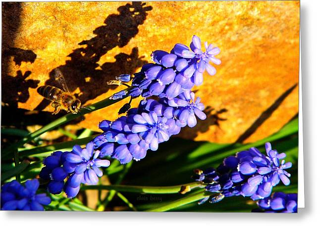 Patterned Marking Greeting Cards - Honeybee In Flight to Grape Hyacinth Greeting Card by Chris Berry