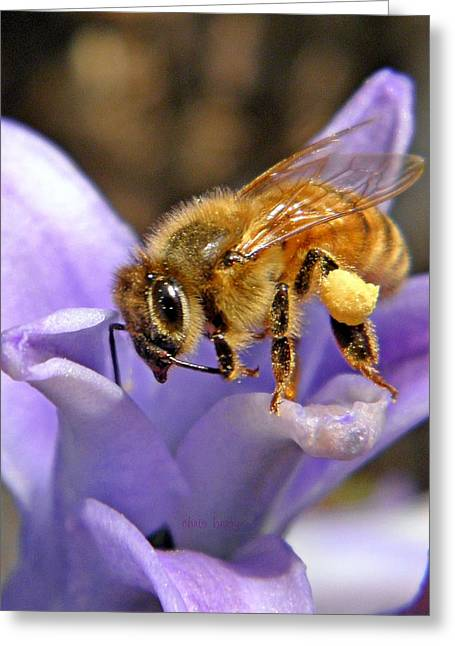 Patterned Marking Greeting Cards - Honeybee on Hyacinth Greeting Card by Chris Berry