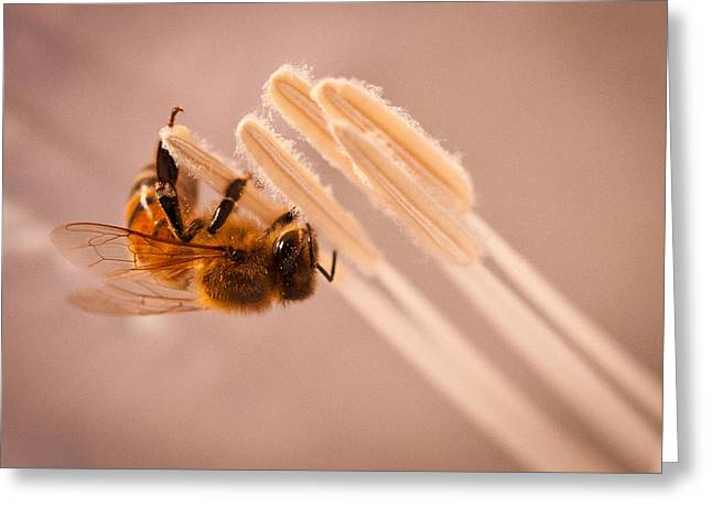 Honeybee On Jimson Greeting Card by Janis Knight