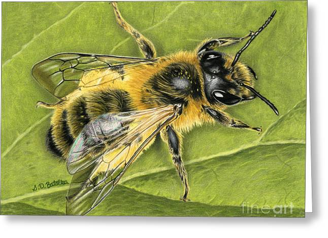 Drawing Color Pencils Drawings Greeting Cards - Honeybee On Leaf Greeting Card by Sarah Batalka