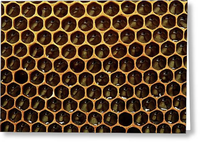 Honeycomb And Honey Greeting Card by Mauro Fermariello