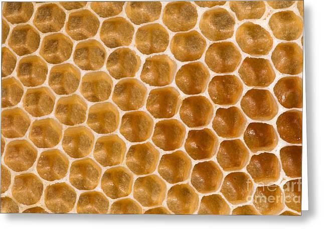 Honeycomb Greeting Cards - Honeycomb Greeting Card by Scott Camazine