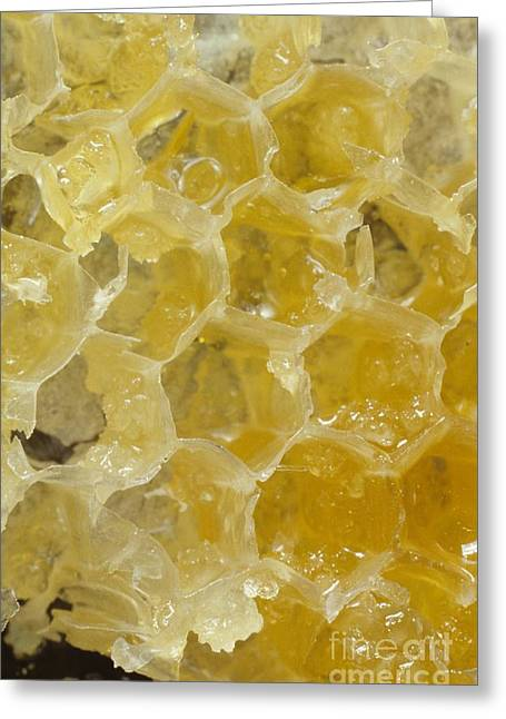 Honeycomb Greeting Cards - Honeycomb Structure, Close-up Greeting Card by Natural History Museum, London