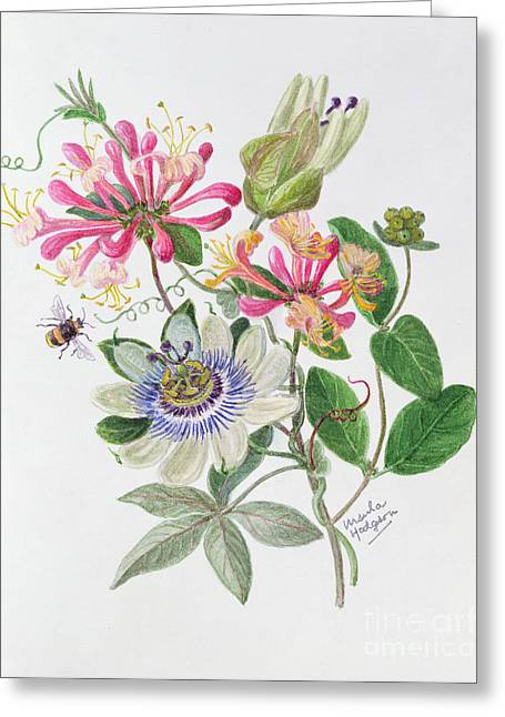 Honeysuckle And Passion Flower  Greeting Card by Ursula Hodgson