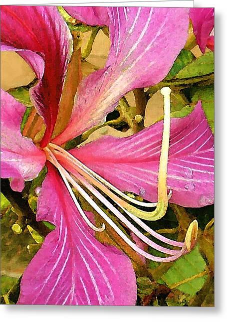 James Temple Greeting Cards - Hong Kong Orchid Tree Greeting Card by James Temple