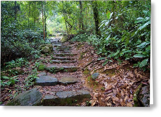 Hong Kong, Tai Po Kau Nature Park Greeting Card by Richard Wright