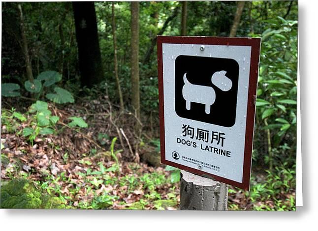 Hong Kong, Tai Po, Tai Po Kau Nature Greeting Card by Richard Wright
