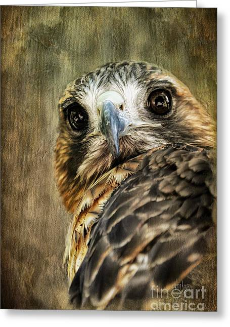 Red Tail Hawk Digital Art Greeting Cards - Honing In Greeting Card by Lois Bryan