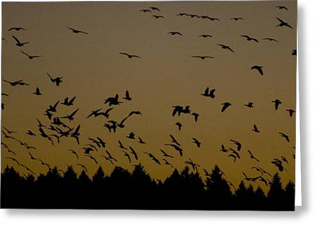 Naturalistic Greeting Cards - Evening Flight Greeting Card by Nathan Rolls