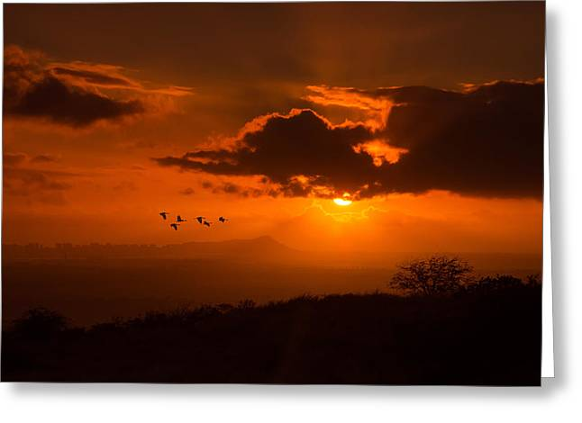 Sea Birds Greeting Cards - Honolulu Diamond Head sunrise Greeting Card by Tin Lung Chao
