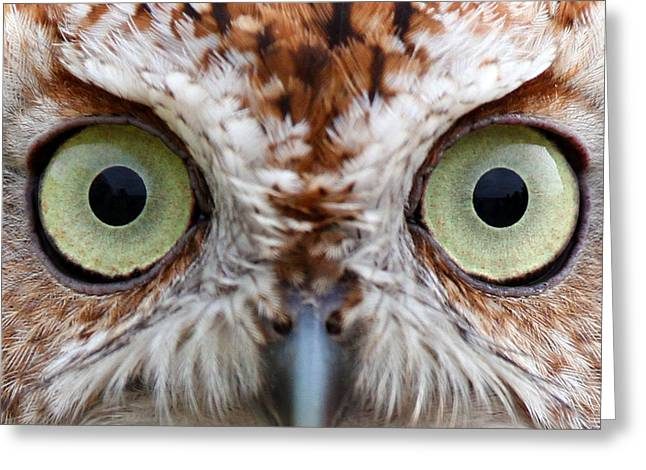 David Yunker Greeting Cards - Hoo Is Watching You Greeting Card by David Yunker