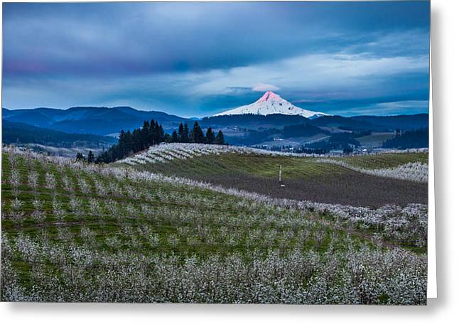 Snow Covered Field Greeting Cards - Hood River Orchard Sunrise Greeting Card by Thorsten Scheuermann