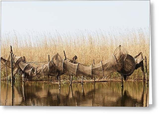 Reflections In River Greeting Cards - Hoop Nets Drying In The Sun Greeting Card by Odd Jeppesen