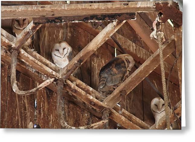 Barnyard Owl Greeting Cards - Hoos There? Greeting Card by Kurt Johansen