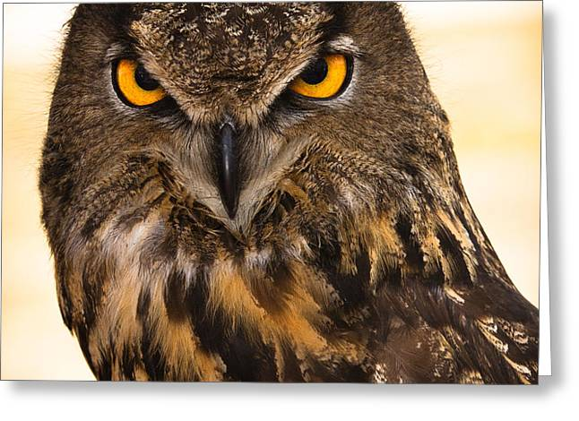 HOOT Greeting Card by Annette Hugen