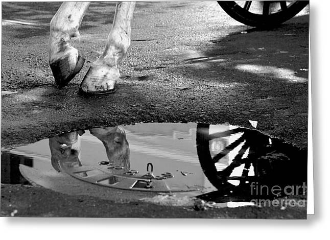 Horse And Cart Greeting Cards - Hooves of the Street Greeting Card by Dario Fabijanic