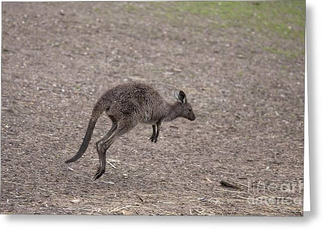 Kangaroo Greeting Cards - Hop Greeting Card by Mike  Dawson