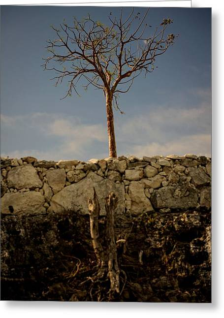 Growing Out Of Rock Greeting Cards - Hope Greeting Card by Debi Adams