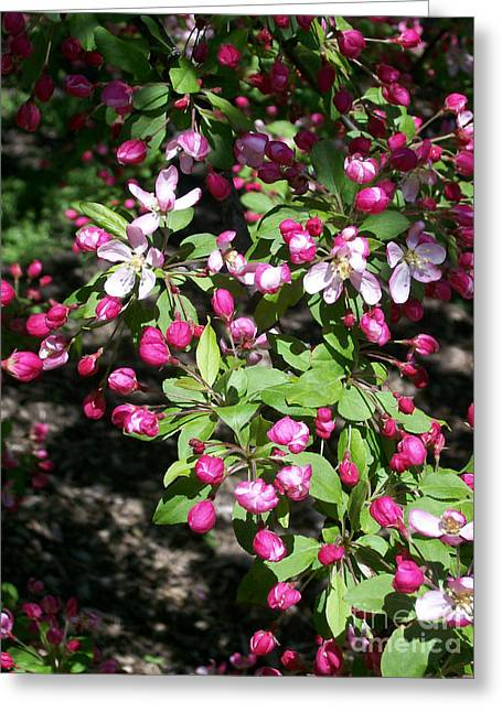Crabapple Cards Greeting Cards - Hope Greeting Card by Laurie Eve Loftin