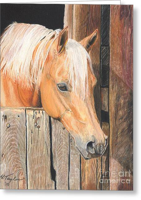 Quarter Horses Drawings Greeting Cards - Hope Greeting Card by Nichole Taylor