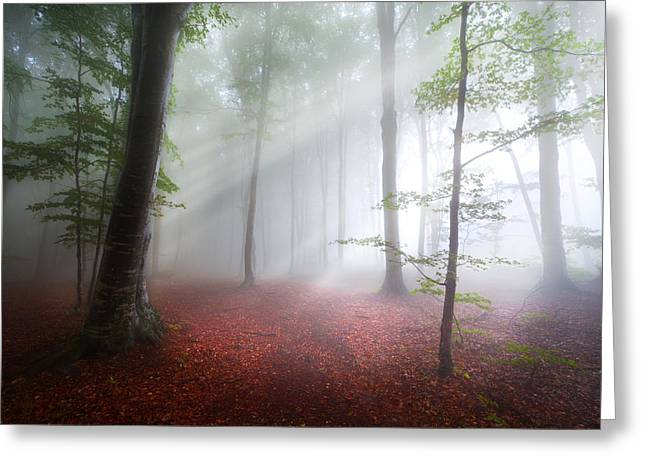 Foggy Day Greeting Cards - Hope Greeting Card by Toma Bonciu