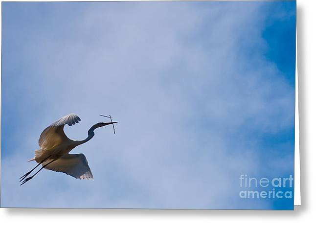 Hopeful Egret Building A Home  Greeting Card by Terry Garvin