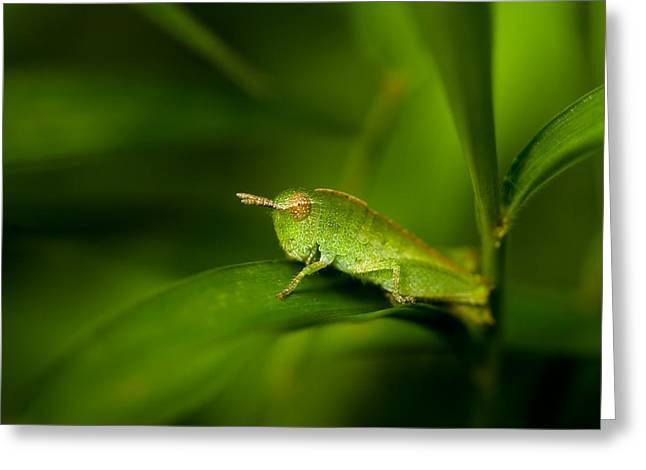 Grasshoppers Greeting Cards - Hopper Greeting Card by Shane Holsclaw