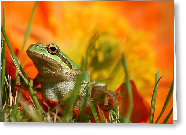 Pacific Tree Frog Greeting Cards - Hopping around Greeting Card by BYET Photography