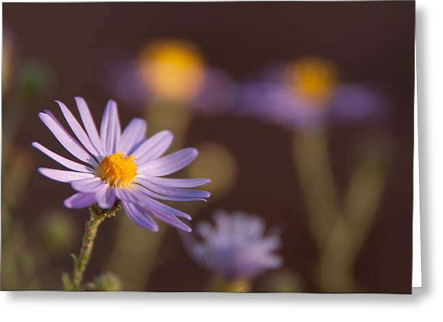 Aster Digital Art Greeting Cards - Horay Spine Aster Greeting Card by Neal Hebert